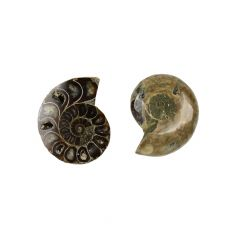 Large Ammonite Pair for Jewellery Setting & Wire Wrapping